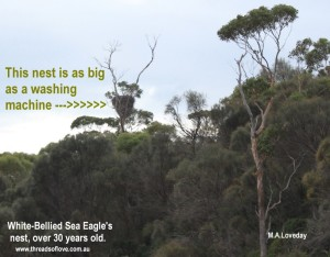 CCCCsea eagles nest