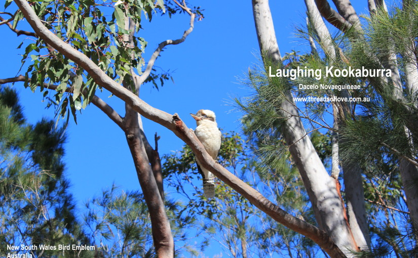 Why are Eucalyptus Trees Magnificent?