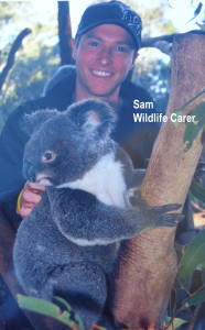 sam wildlife carer